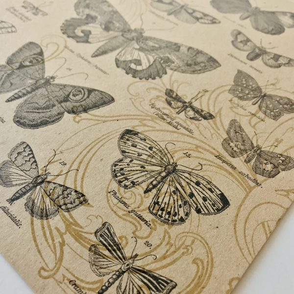 Craft Collection Paper Pack of 4